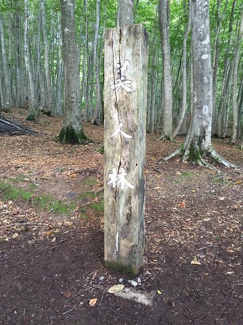 新潟県十日町市松之山松口にある美人林へ行ってきた
